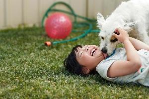 Dog Bites Child Over Food